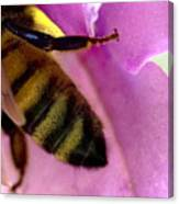 Close View Of Single Honey Bee Canvas Print