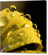 Close View Of Water Droplets Canvas Print