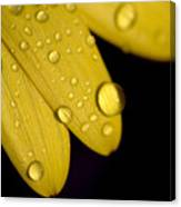Close View Of Water Drops On The Petals Canvas Print