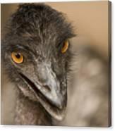 Closeup Of A Captive Emu Canvas Print