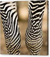 Closeup Of A Grevys Zebras Legs Equus Canvas Print