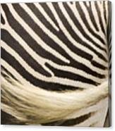 Closeup Of A Grevys Zebras Rear End Canvas Print