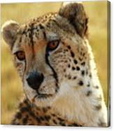 Closeup Of Cheetah Canvas Print