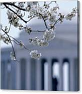 Closeup Of Cherry Blossoms Canvas Print