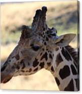 Closeup Of Giraffe Canvas Print