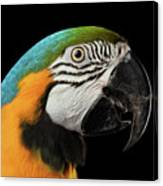 Closeup Portrait Of A Blue And Yellow Macaw Parrot Face Isolated On Black Background Canvas Print