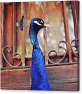 Closeup Portrait Of A Peacock Peafowl Canvas Print