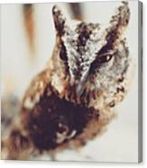 Closeup Portrait Of A Young Owl Looking At The Camera Canvas Print