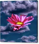 Cloud Flower.  Canvas Print