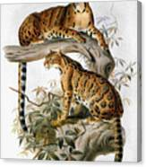 Clouded Leopard, 1883 Canvas Print