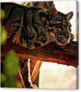 Clouded Leopard II Canvas Print