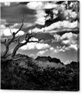 Clouds And A Tree Baw Canvas Print