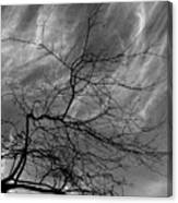 Clouds And Branches Canvas Print