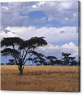 Clouds Over The Masai Mara Canvas Print