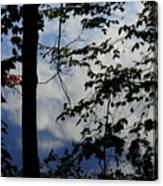 Clouds Tree Water Canvas Print