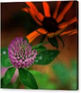 Clover In My Yard Canvas Print