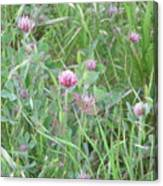 Clover In The Grass Canvas Print