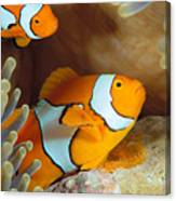 Clownfish Canvas Print