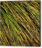 Clump Of Grass Texture Canvas Print