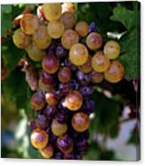 Cluster Of Ripe Grapes Canvas Print