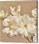 Cluster Of White Roses Posterized Canvas Print