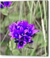 Clustered Bellflower Canvas Print