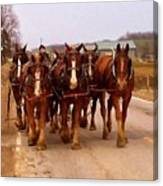 Clydesdale Amish Plow Team Canvas Print