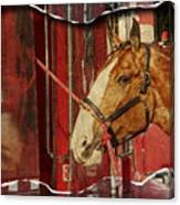 Clydesdale Ripped Canvas Print