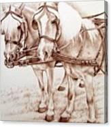 Coach Horses Canvas Print