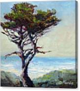 Coast Cypress Canvas Print