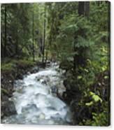 Coast Redwood Forest Big Sur California Canvas Print