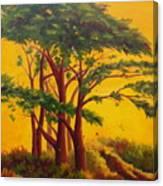 Coastal Morning Canvas Print