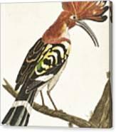 Cock Hoopoe Canvas Print