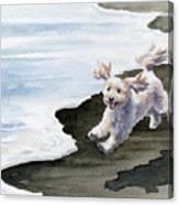 Cockapoo At The Beach Canvas Print