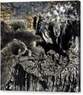 Cockapoo Tends Racoons Canvas Print