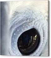 Cockatiel Eye Canvas Print