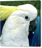 Cockatoo Bird Canvas Print