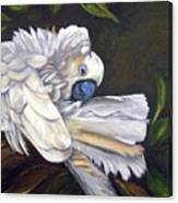 Cockatoo Preening Canvas Print