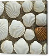 Cockles Collection Canvas Print