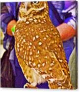 Coco The Burrowing Owl In Living Desert Zoo And Gardens In Palm Desert-california Canvas Print