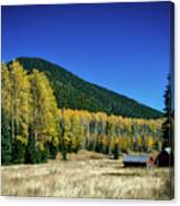 Coconino National Forest Canvas Print