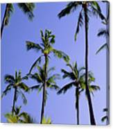 Coconut Grove At Wailua Canvas Print