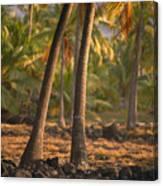 Coconut Palm Grove Canvas Print