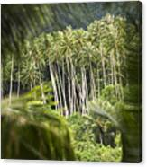 Coconut Palm Trees Canvas Print