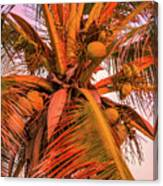 Coconut Sunset Canvas Print