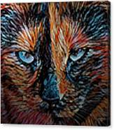 Coconut The Feral Cat Canvas Print