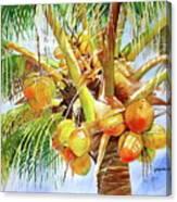 Coconut Tree Canvas Print