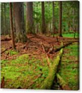 Coeur D'alene Forest Canvas Print