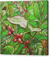 Coffee Cherries Canvas Print