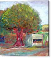 Coffee Tree Aauj Canvas Print